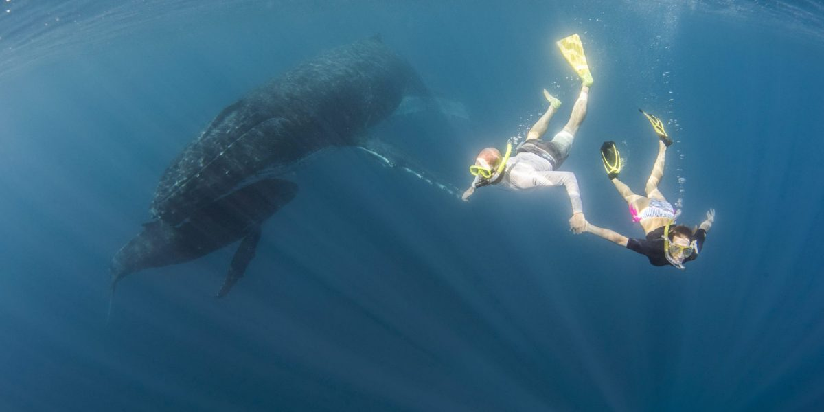 Join me to Swim with Whales in Tonga scaled 1200x600 - Join me to Swim with Whales in Tonga