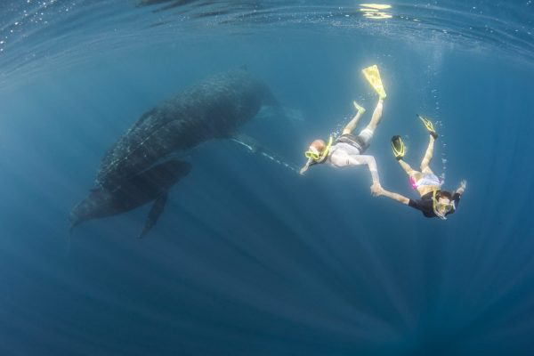 Join me to Swim with Whales in Tonga scaled 600x400 - Join me to Swim with Whales in Tonga