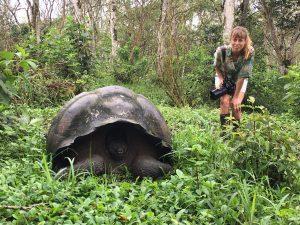 Giant Tortoise 300x225 - Galapagos