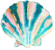 Shell - Sea Photography
