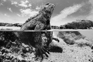 Underwater photographer UK 300x200 - Galapagos